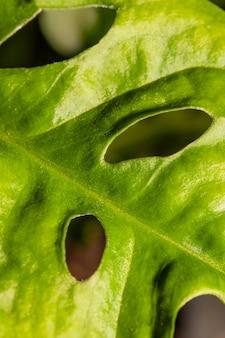 텍스처와 잎 줄기의 클로즈업
