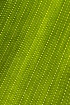 葉の表面のクローズアップ