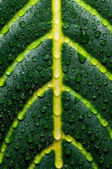Крупный план листьев с каплями воды