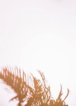白い背景で隔離の葉影のクローズアップ