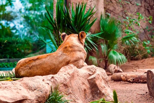 Крупным планом львица лежал на земле с зелеными растениями