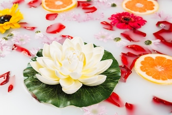 Close-up of lotus with grapefruits and petals on milk