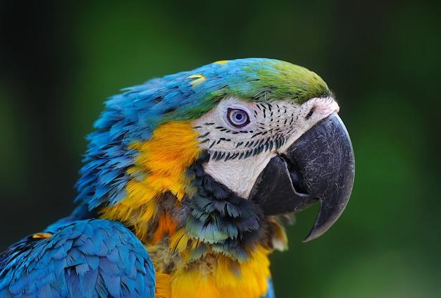 Крупный план птицы ара