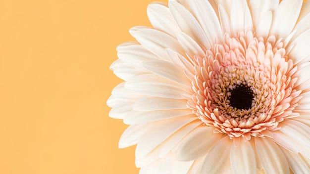 매크로 피어 꽃의 근접 촬영