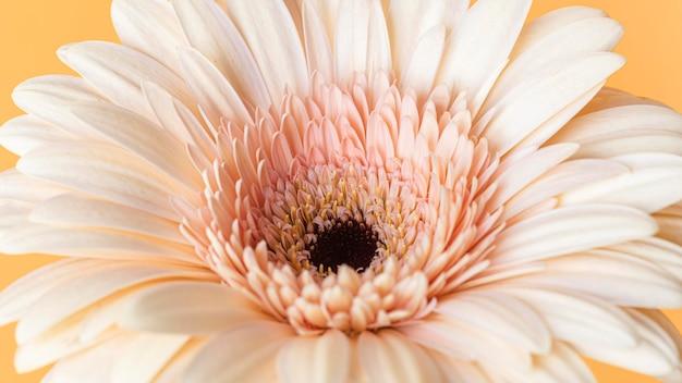 マクロ咲いた花のクローズアップ