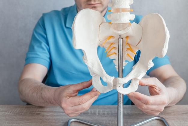 좌골 결절을 보여주는 남성 의사의 손을 클로즈업하거나 골격 척추 모델에 뼈를 앉힙니다.