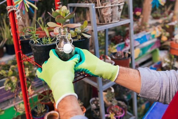 サボテンの植物を瓶に持って男性の庭師の手のクローズアップ