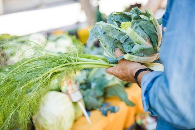 Крупным планом мужской руки, держащей укроп и капуста романеско овощ