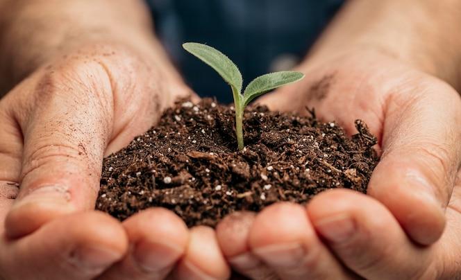 土と小さな植物を保持している男性の手のクローズアップ