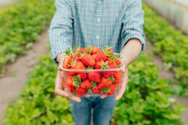 男のクローズアップ農家は彼の手で彼の手で透明なプラスチックの箱に熟した赤いイチゴを持っています彼はイチゴ温室アグリビジネスと人々にいます