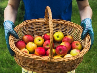 Close-up of man's hand holding basket of red apple