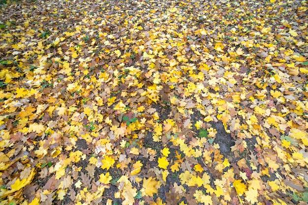 秋の公園で地面を覆う多くの落ちた黄色の葉のクローズアップ。