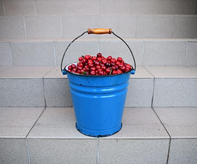 階段の上に立って、桜の収穫でいっぱいの金属製のバケツのクローズアップ。さくらんぼの収穫