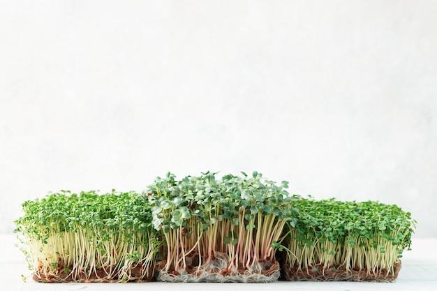 Крупный план микрозелени брокколи, кресс-салата и редиса, растущих на льняной циновке