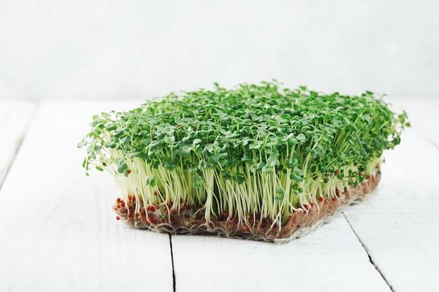 리넨 매트에 성장하는 microgreen 브로콜리의 클로즈업