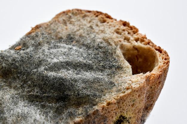 パンのカビのクローズアップ