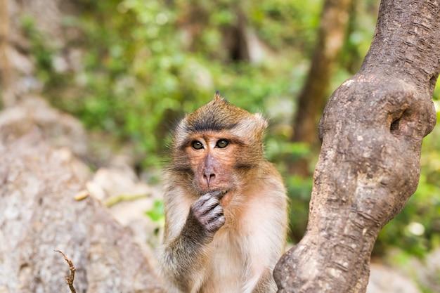 自然の背景の猿の顔のクローズアップ。