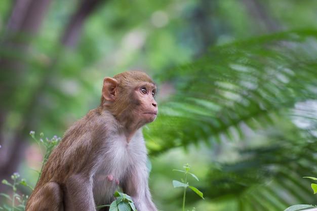 屋外に座っている猿のクローズアップ