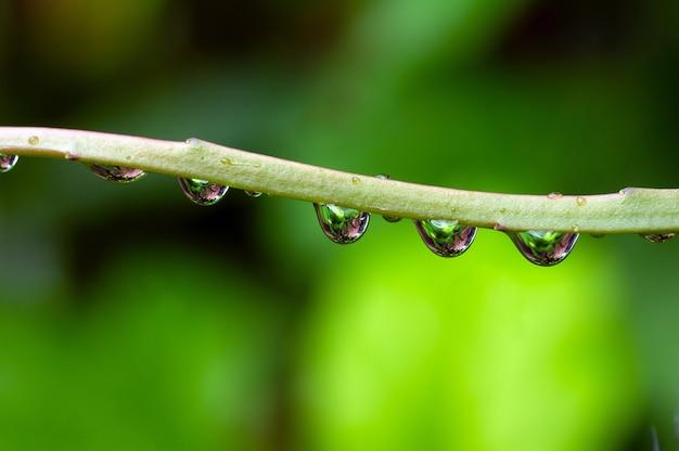 Крупным планом утренней свежести росы на ветке растения