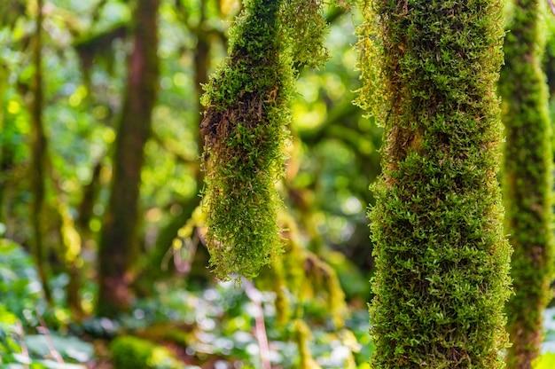 Крупным планом мха, растущего на ветвях деревьев