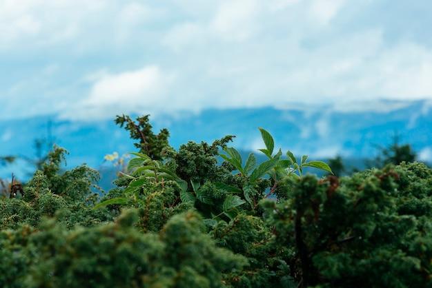 山頂の緑の植生のクローズアップ
