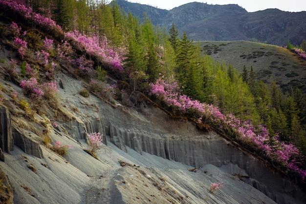 斜面に開花低木と緑の木々と山々のクローズアップ。山の一部が崩落し、山の一部が見えた。