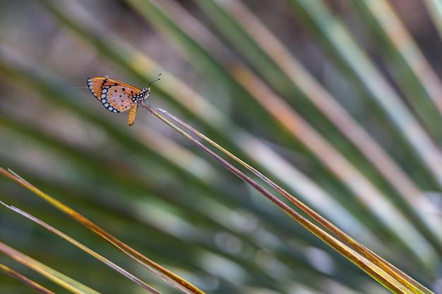 Крупным планом разноцветные бабочки