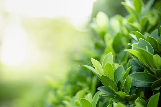 Крупным планом зрения природы молодых зеленых листьев на фоне затуманенное зелени под солнечным светом Premium Фотографии
