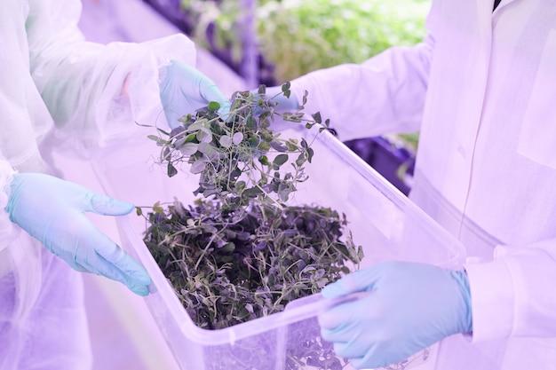 青い光に照らされた苗床温室の植物を世話する2人の農業技術者のクローズアップ、コピースペース