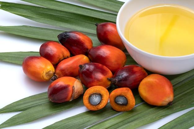 Закройте вверх плодов масличной пальмы и приготовления пальмового масла с пальмовым листом на белом пространстве.