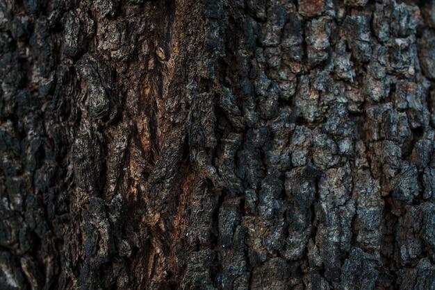 古い木の幹のテクスチャのクローズアップ