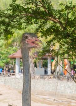 公園でダチョウの鳥の頭と首の正面の肖像画を閉じます。