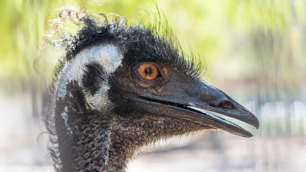Крупный план страуса в парке яркон, тель-авив, израиль.
