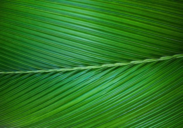 ヤシの葉の緑の背景のクローズアップ。