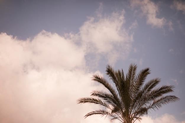 하늘에 대 한 야 자 나무의 클로즈업