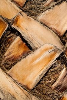 Крупный план ствола пальмы