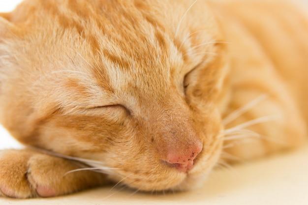 眠っている丸まった穏やかなオレンジ色の猫のクローズアップ