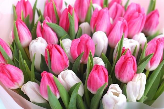 ピンクと白のチューリップの花の花束のクローズアップ。春のグリーティングカード。 。イースター、春の花のコンセプト。母または女性の日。