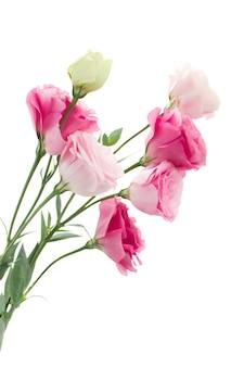 Крупным планом розовые цветы эустомы изолированные