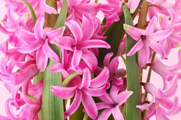 ピンクの花の背景のクローズアップ