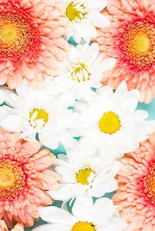 Close-up of pink gerbera with white flowers