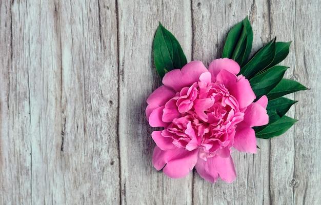 Крупный план бутонов розового пиона