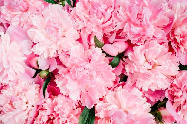 Крупный план розовых цветов пиона