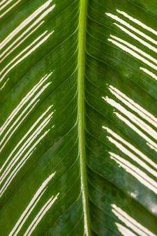 Крупный план стебля листьев растения с текстурой