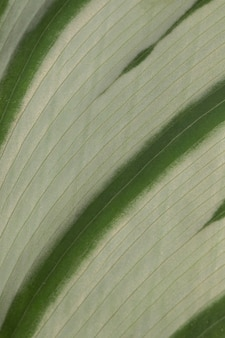 Крупный план текстуры листьев растений