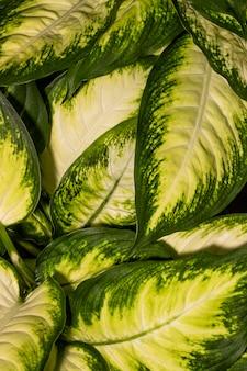 色付きのエッジを持つ植物の葉のクローズアップ