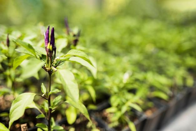 紫の花を持つ植物のクローズアップ