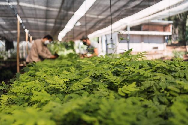 임업 보육에 있는 식물의 클로즈업입니다.