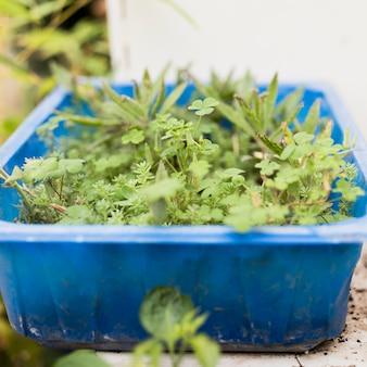 青いバスケットの植物のクローズアップ