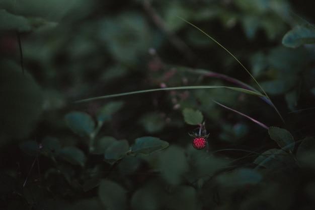 식물의 클로즈업